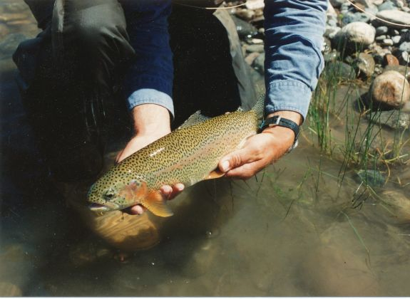 trout_pic_2