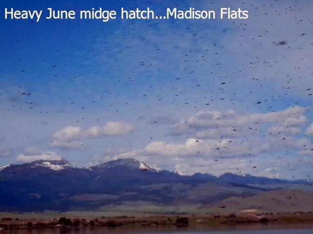 flats_midge_hatch_008