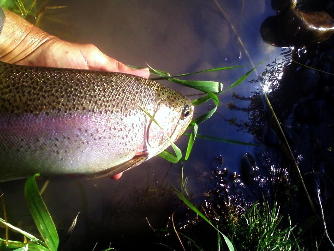 channels_rainbow_2014