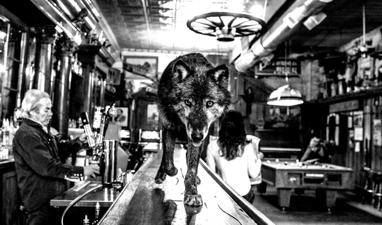 wolf_005_website