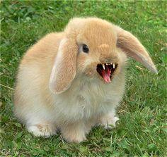 fuzzy_bunny
